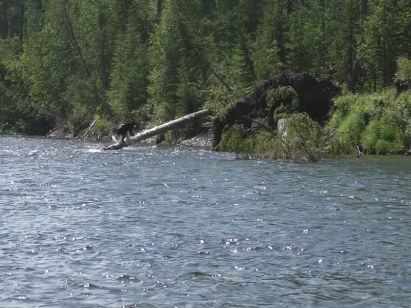 Брод через реку