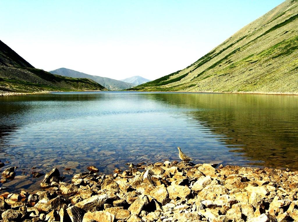 Рябчик на Мертвом озере