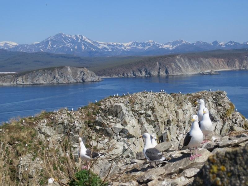 Хозяйки прибрежных скал