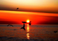 Чайки на закате