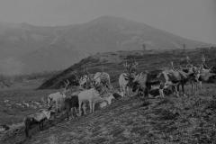 Эвенки в аяне