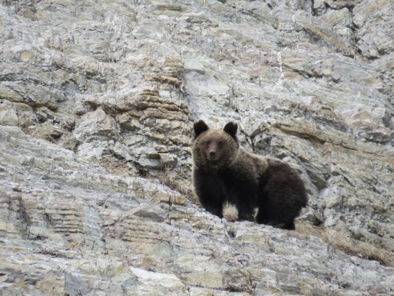 Бурый медведь (фото А.Карамзина)
