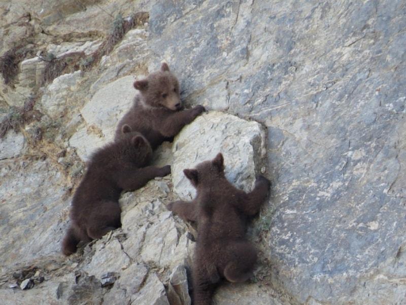 Медвежата на Алдоме
